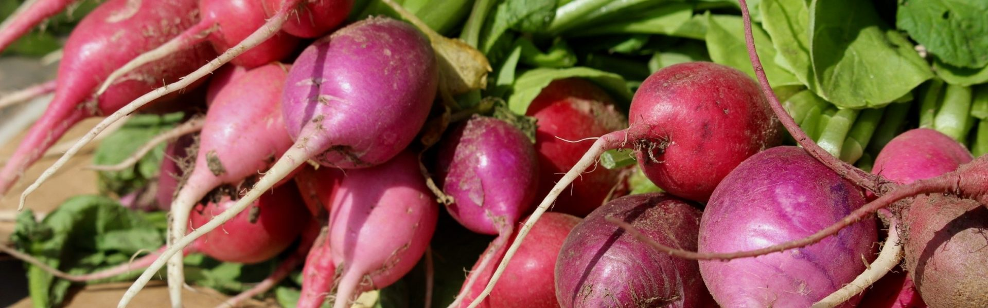 radishes on a table at a farm
